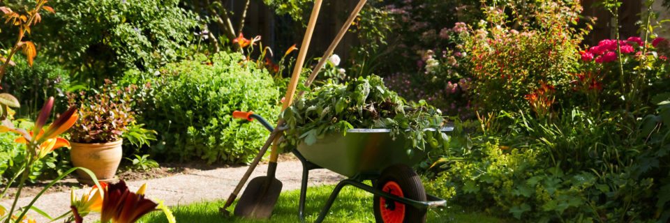 With Fall around the corner, it's the perfect time to improve your lawn's look organically.