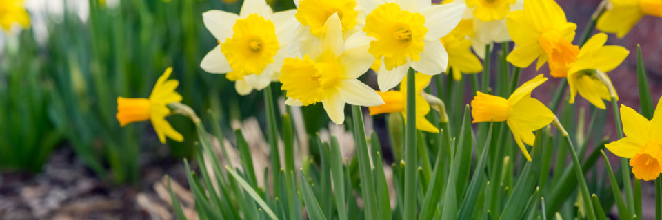 With Spring and Summer around the corner, it's the perfect time to improve your garden's look organically.